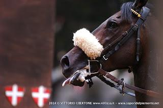 PALIO DI ASTI 2014 prove cavalli