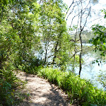 Walking along the bank of the Lane Cove River (344698)