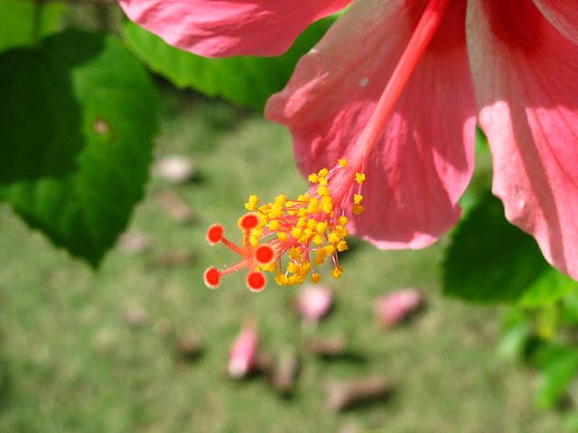 Из зимы в лето. Филиппины 2011 - Страница 3 IMG_0014