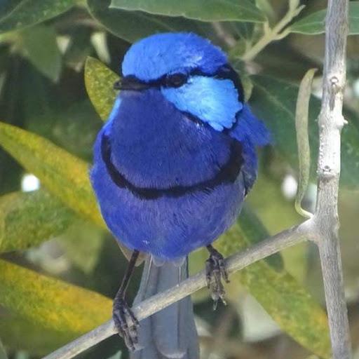 Yvonne Andrews