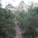 Track through heath (79948)