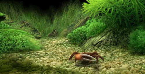 Dream aquarium screensaver 1 2 9 full full software - Dream aquarium virtual fishtank 1 ...