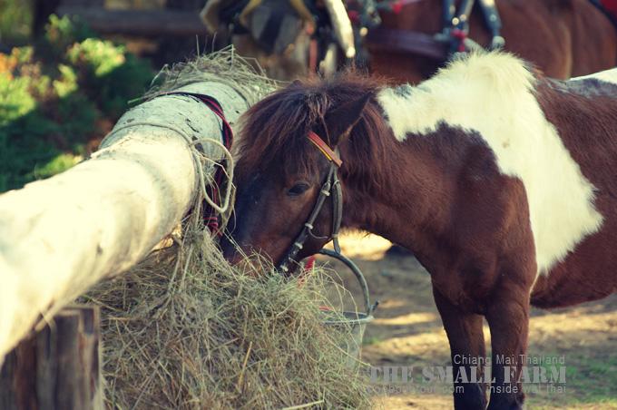 ม้าที่the small farm