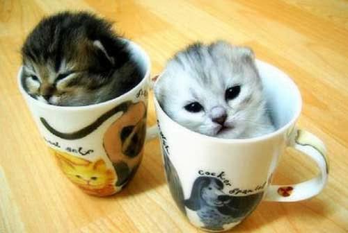 Kucing dalam gelas