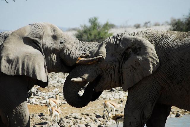 أفضل ما في أفريقيا  Best of Africa Namibia_180807143531