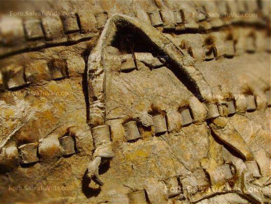 Museo Marq Alicante - Hallstatt el reino de la sal DSC09541