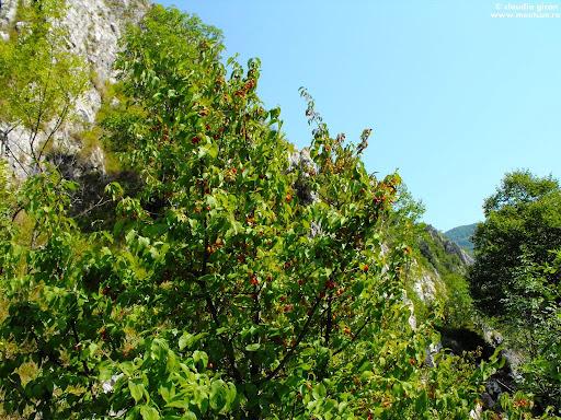 fructe de padure: coarne