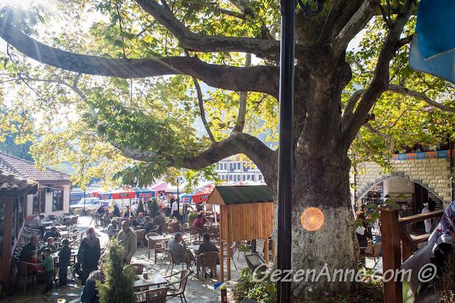 çınar altında çay bahçesi, Göynük