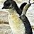JT FlyBoy avatar image