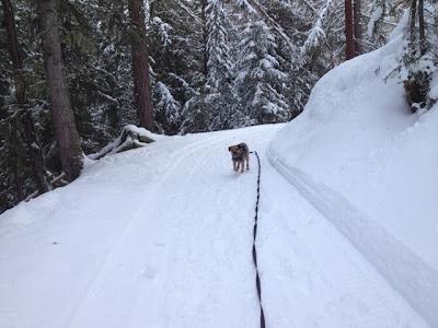 Hund rennt ohne Unterbrechung auf der Winterwanderung