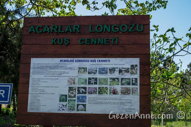 Sakarya Karasu'daki Acarlar Longozu Kuş Cenneti