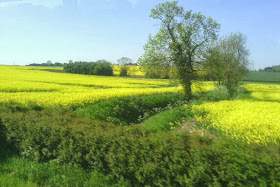 Other worldly yellow fields bisected by hidden stream