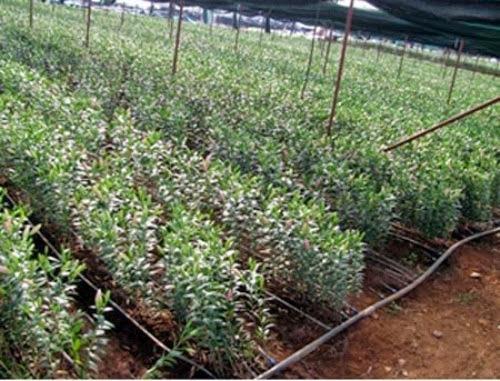 den tham vuon hoa nhiet doi moc chau%2B%285%29 Đến thăm vườn hoa nhiệt đới Mộc Châu