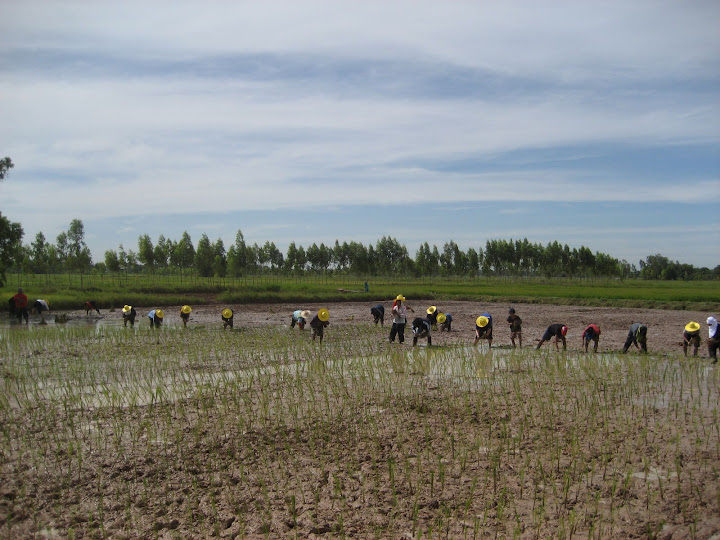 GMFT staff and children harvesting rice at Eden