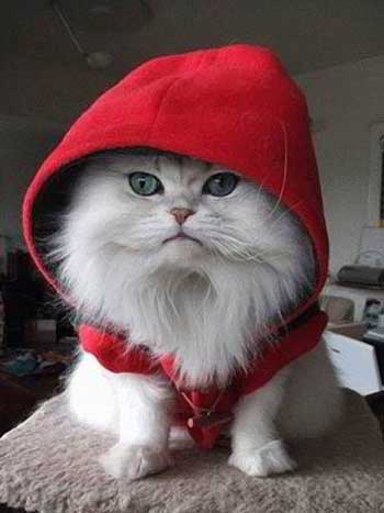 Gambar kucing imut dan lucu
