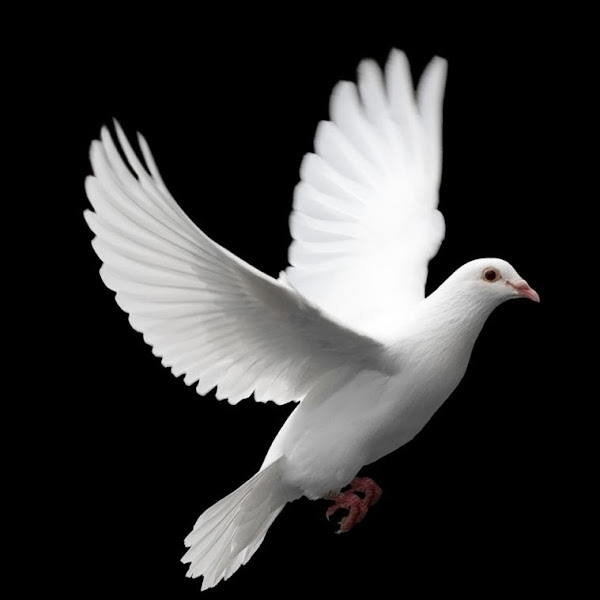 Roy Varughese picture