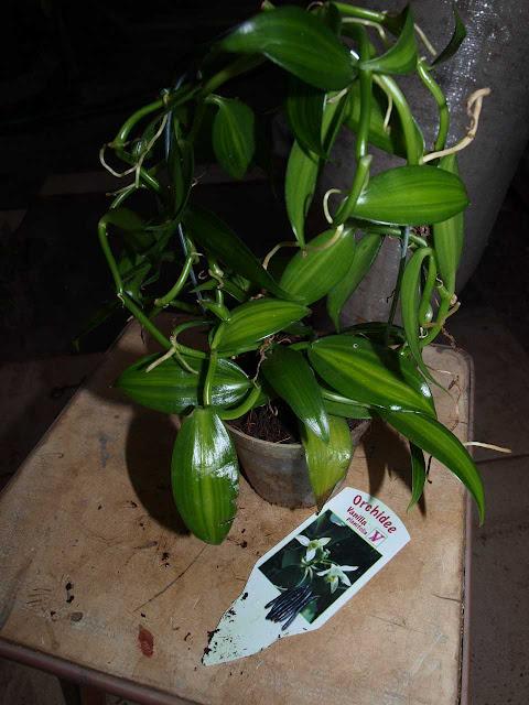 Растения из Тюмени. Краткий обзор - Страница 7 P1011222