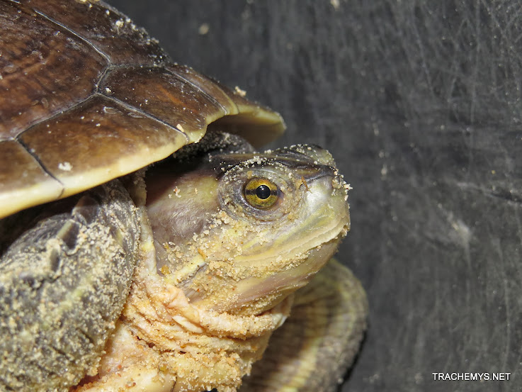 mes tortues (BK) - Page 12 IMG_4496