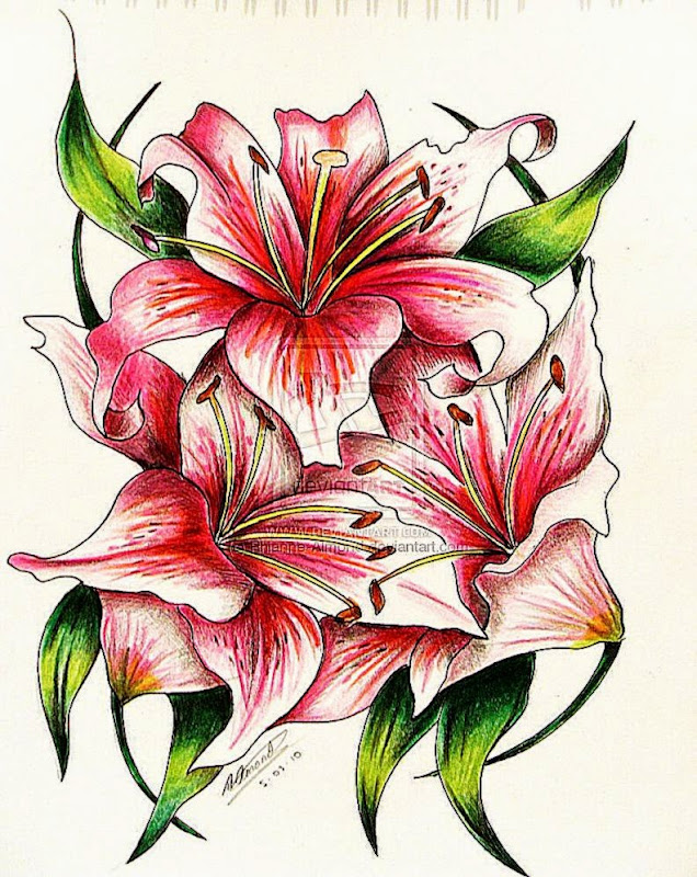 DeviantArt More Like Pink Lily tattoo by Rhianne Almond