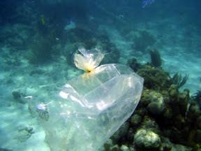 haulover_plastic_bag.jpg