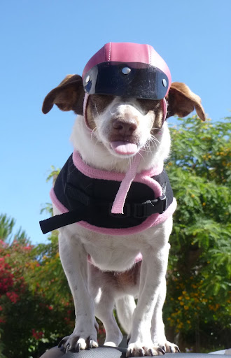 Snoopy : 8 Jul 2004 - 13 Apr 2013