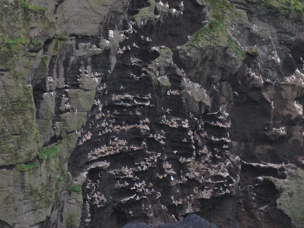 Birds on a cliff
