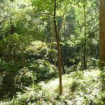 Vegetation found in Blackbutt Reserve (399976)