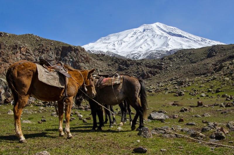 Caii care ne vor transporta bagajele