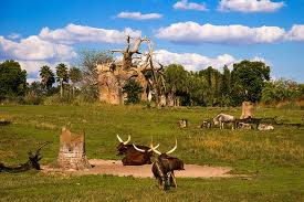 Orlando Florida Animal Kingdom