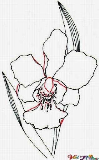 vẽ hoa lan bằng bút chì (bước 4)