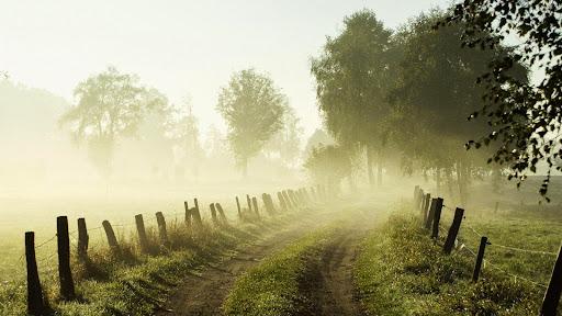 Misty Morning, Lower Saxony, Germany.jpg