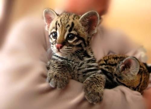 Conheça 10 Animais Da Fauna Japonesa Curiosidades Do Japão