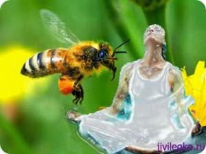Дыхание пчелы