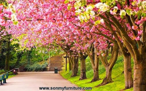 Trang trí nhà đón Tết với giấy dán tường mùa xuân-8