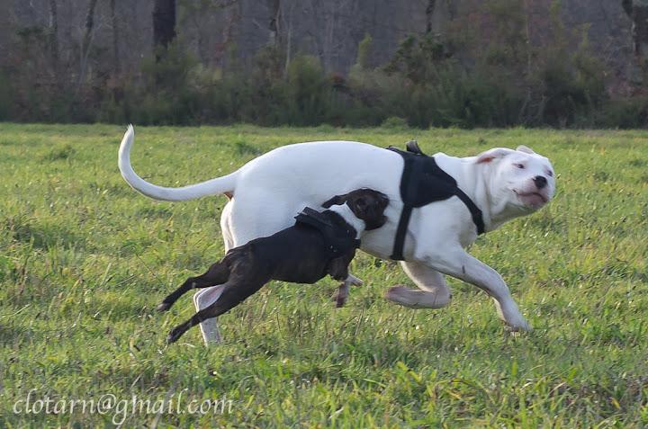 Rencontre canine du forum en région bordelaise (33) - Page 2 Balade33-0613-2