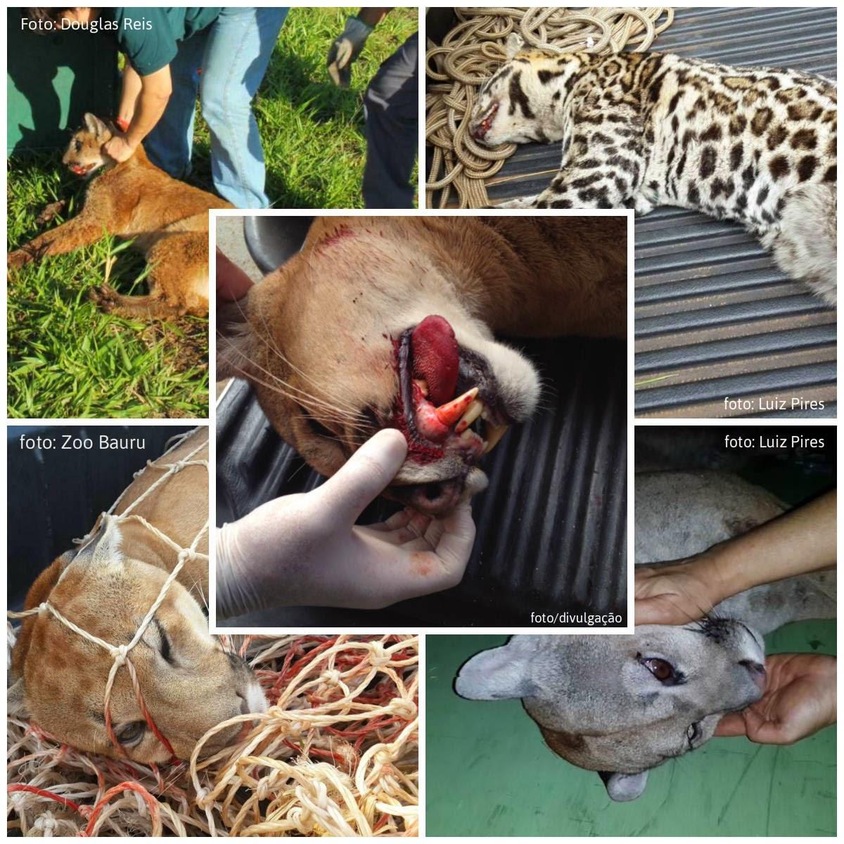 Excepcional oficina de filosofia: Proteção para animais do Cerrado: petição  FP09