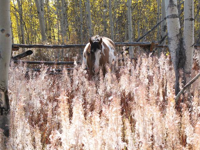 Fireweed-and-Chellum.jpg