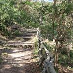 Track east of Taronga Zoo (69844)