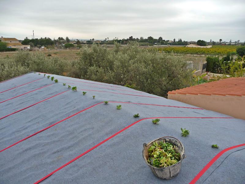 Cubierta vegetal techo verde Alicante bajo peso ultraligera green roof