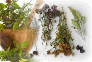 заготовка целебных растений