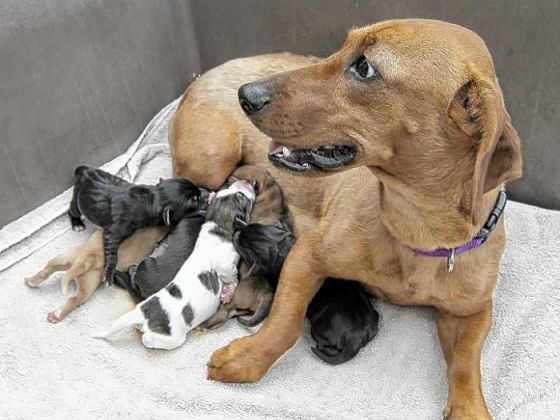 Mother Dog and Puppies Owe Their Lives to Walking Trio