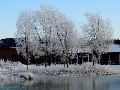 Trees covered in snow by a frozen lake