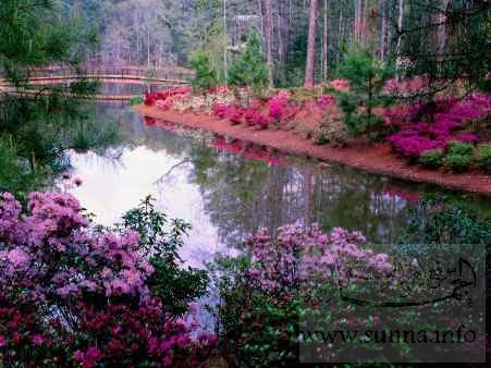 مجموعة صور لمناظر طبيعية مرسلة من أختنا وردة الربيع bustan.jpg