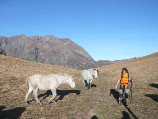 Les chevaux du col de Corbière