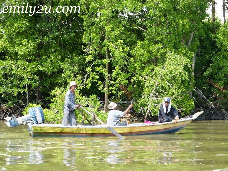 mangrove swamp