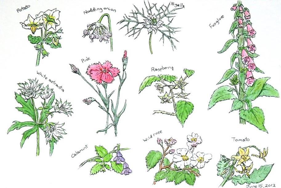 Flowers16