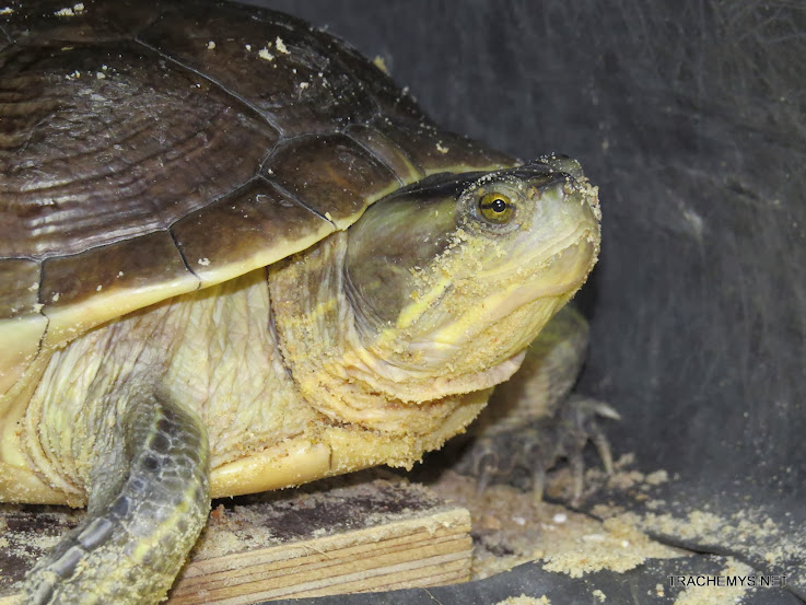 mes tortues (BK) - Page 12 IMG_4494