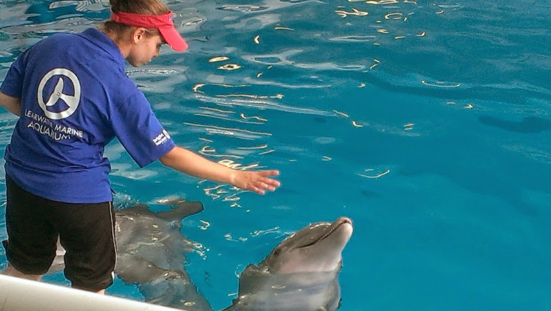 IMAG6347 A Dolphin Tale 2 Experience at Clearwater Marine Aquarium: #WinterHasHope