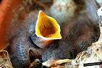 Los Pajaritos que nacieron en una maceta