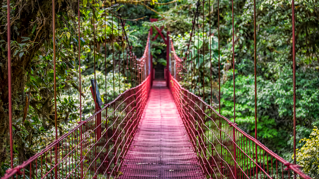 A hanging bridge in Monteverde Cloud Forest